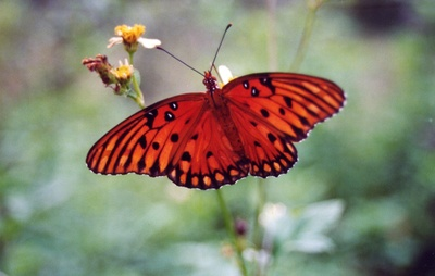 Orange Butterfly Setting at Tree