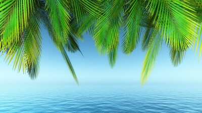 Palm Tree Leave Over Sea
