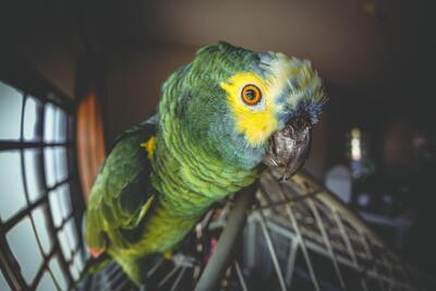Parrot Bird Close Up 4K Photo