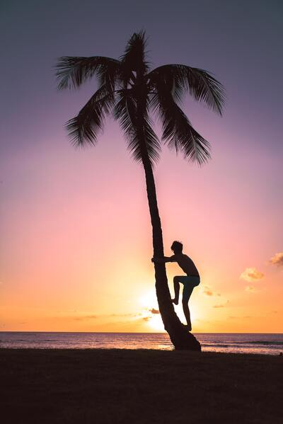 Person on Coconut Tree during Sunset