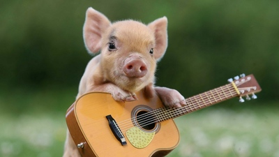 Pig Animal with Violin