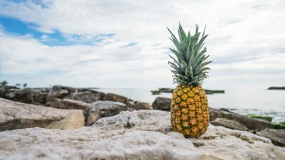 Pineapple Fruit in Rock Near Beach