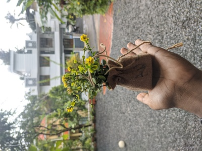 Plastic Plant In Hand