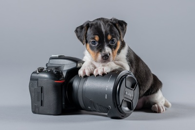 Puppy With Camera