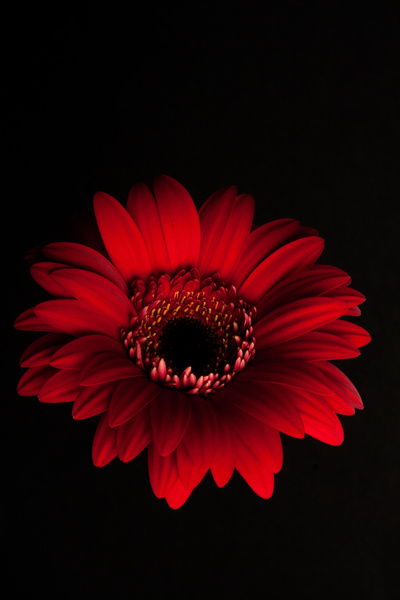 Red Flower Mobile Photo