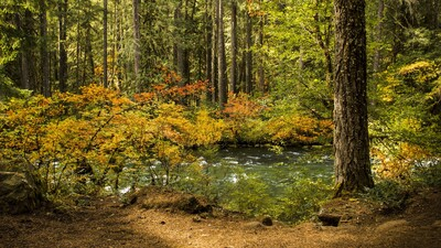 River in Beautiful Forest Nature Pic