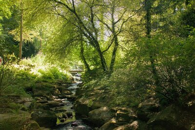 Small Forest River Nature Photography