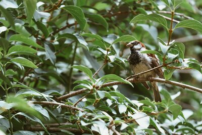 Sparrow In Tree Bird Photo