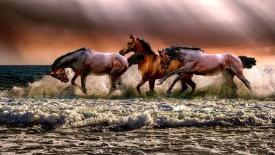 The Horses Running in Water