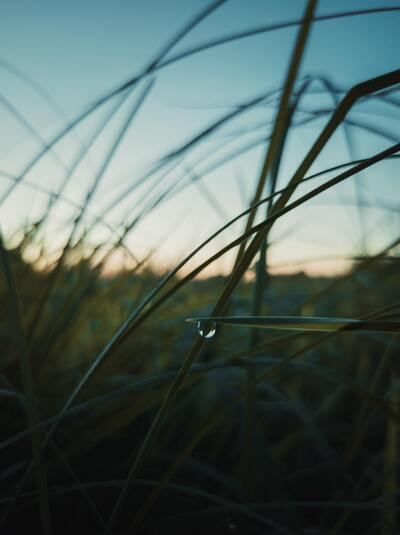 The Water Drop on Grass Rainy Season Pic