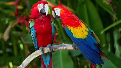 Two Parrot Bird Sitting on Tree Branch