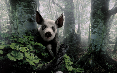 White and Black Pig in The Forest