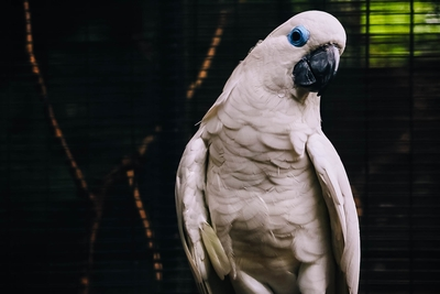 White Parrot Bird Photography