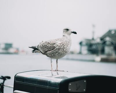 White Seagull Bird 4K Photo