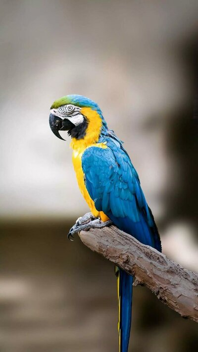 Yellow and Blue Parrot Bird
